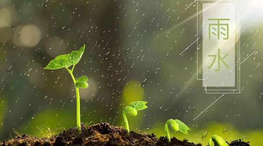 雨水(二十四节气之一)