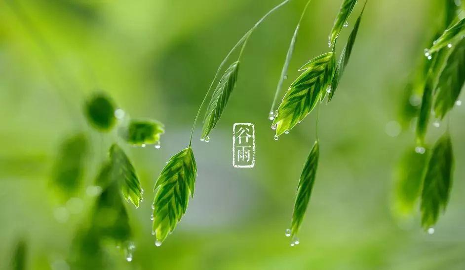 谷雨 (二十四节气之一)